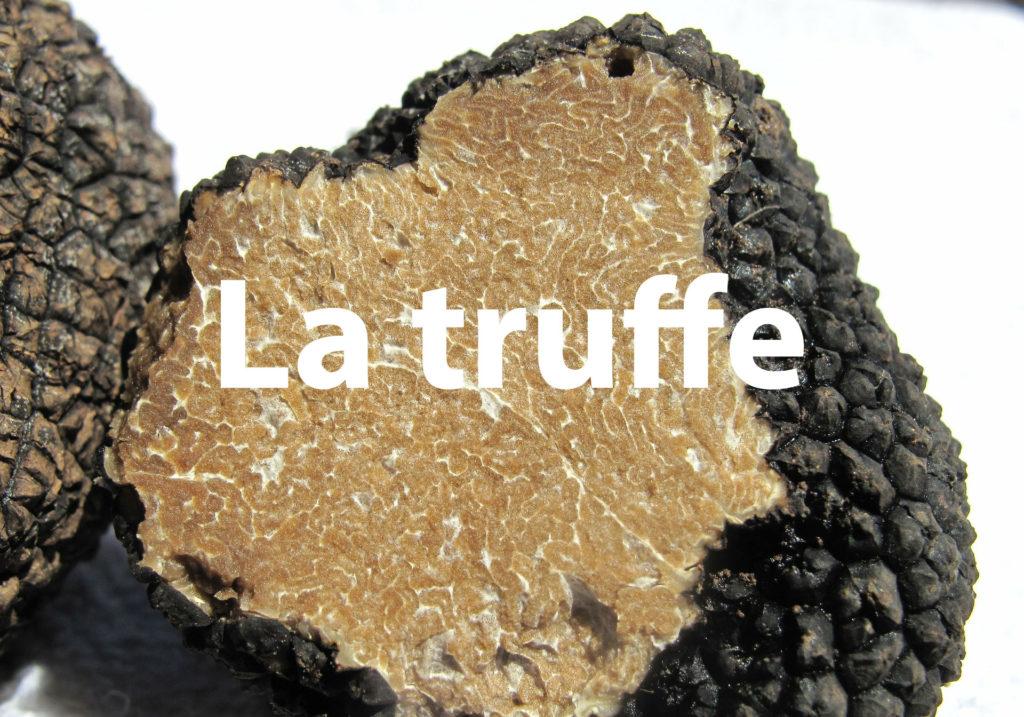 truffle-203031_1920-1000x700